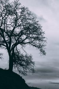Tree in the Sky, Black and White Mount Diablo, Walnut Creek Danville by Vincent James