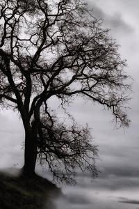Tree in the Sky by Vincent James