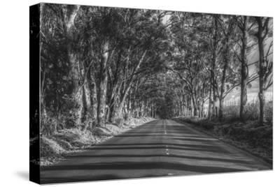 Tree Tunnel to Old Koloa Town (B/W), Kauai Hawaii