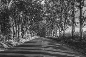 Tree Tunnel to Old Koloa Town (B/W), Kauai Hawaii by Vincent James