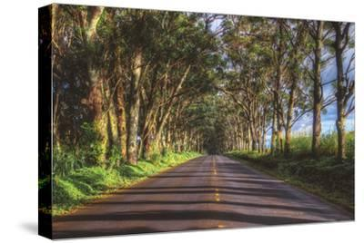 Tree Tunnel to Old Koloa Town, Kauai Hawaii
