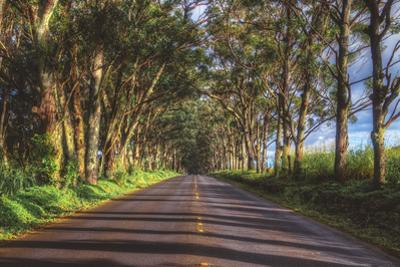 Tree Tunnel to Old Koloa Town, Kauai Hawaii by Vincent James
