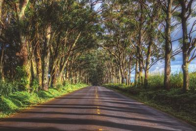 Tree Tunnel to Old Koloa Town, Kauai Hawaii
