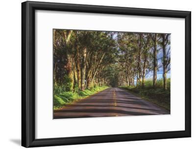 Tree Tunnel to Old Koloa Town, Kauai Hawaii by Vincent James