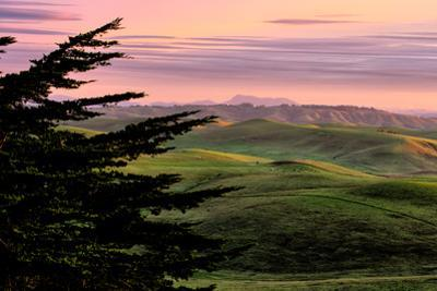 Tree View Hills and Winter Green Northern California Hills Marin County Country by Vincent James