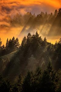 Trees, Fog and Light Beam Design, Mount Tam, San Francisco by Vincent James