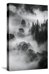 Trees Fog & Mist at Sandy River Black White Landscape Oregon by Vincent James
