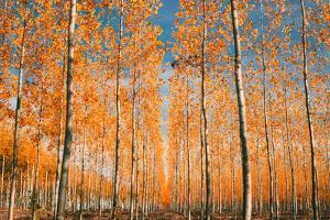 Trees of Mystery, Forest in Autumn, Northern Oregon by Vincent James