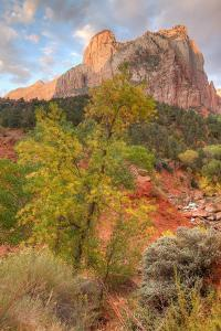 View Inside Zion Canyon by Vincent James