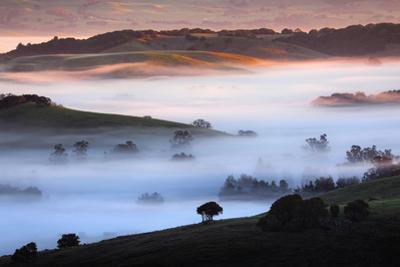 Warm Cool Hills Light & Fog Petaluma Pasturel Farm Northern California by Vincent James