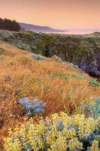 Warm Glow at Sea Ranch by Vincent James
