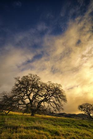 Warm Morning Light and Oak Trees, Mount Diablo, San Francisco Bay Area by Vincent James