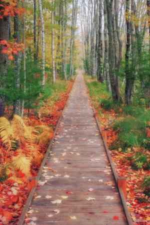 Wild Garden of Acadia Path by Vincent James