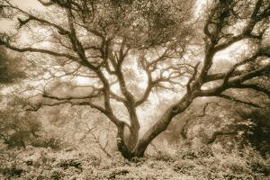 Wild Oak, Oakland Hills California by Vincent James