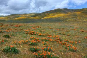 Wildflower Hills of Gorman by Vincent James