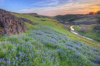 Wildflower Hillside at Sunset, Table Mountain by Vincent James