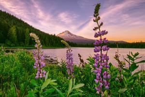 Wildflower Lake, Trillium Lake and Lupine, Mount Hood Wilderness, Oregon by Vincent James