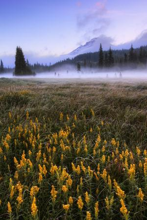Wildflowers & Morning Mist at Mount Hood Meadow Oregon Wilderness PNW by Vincent James