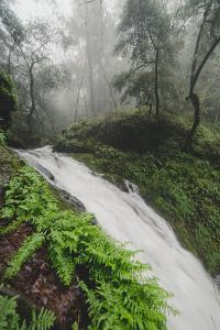Winter Flow at Cataract Falls, Marin County Waterfall, Bay Area, California by Vincent James