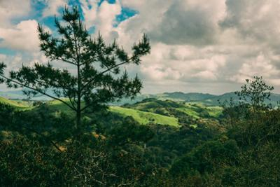 Winter Hills of Green, Oakland Bay Area Northern California by Vincent James