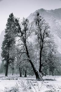 Winter Mornings & Light Snow Yosemite Valley by Vincent James
