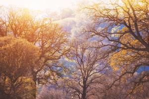 Winter Oaks, Sacramento California by Vincent James