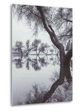 Winter Tree Design, Marin County California