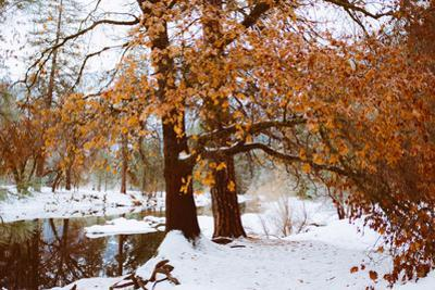 Winter Visions Riverside. Merced River, Yosemite Valley by Vincent James