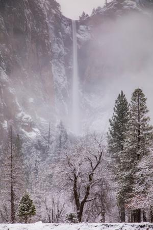 Yosemite Valley Falls & Trees in Mist and Snow by Vincent James