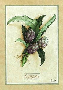 Cynara by Vincent Jeannerot