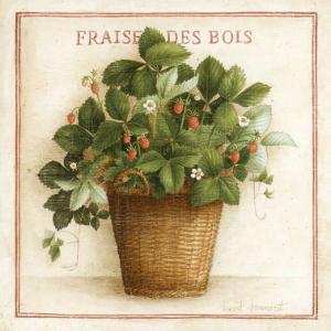 Fraise des Bois by Vincent Jeannerot