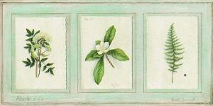 Herbier, Planche 24 by Vincent Jeannerot