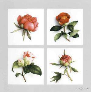 Les Fleurs Roses by Vincent Jeannerot