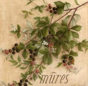 Mures by Vincent Jeannerot