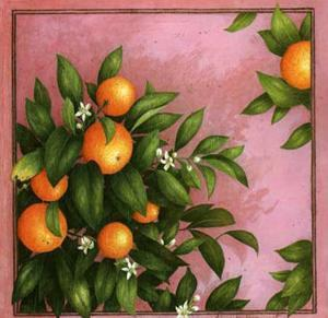 Oranges by Vincent Jeannerot