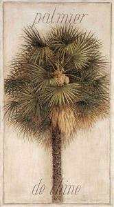 Palmier de Chine by Vincent Jeannerot