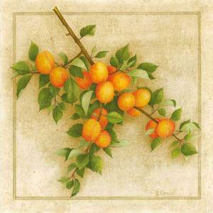 Abricots de Nancy by Vincent Perriol