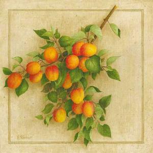 Abricots du Roussillon by Vincent Perriol
