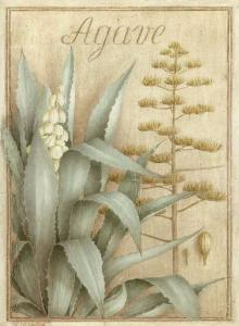 Agave by Vincent Perriol