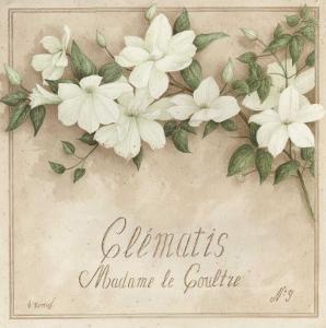 Clematis, Madame de Coultre by Vincent Perriol