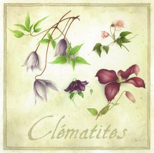 Clématites by Vincent Perriol