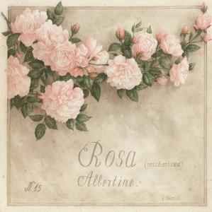 Rosa, Albertine by Vincent Perriol