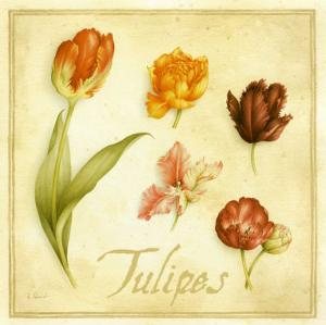 Tulipes by Vincent Perriol