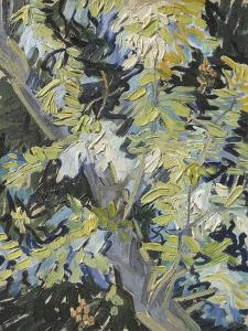 Acacia in Flower by Vincent van Gogh