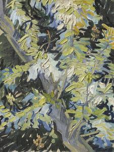 Acacia in Flowers by Vincent Van Gogh