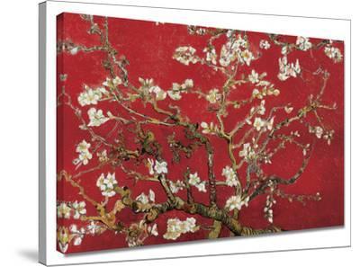Almond Blossom (Red)