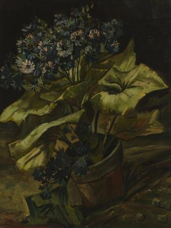 Cineraria, 1886 by Vincent van Gogh