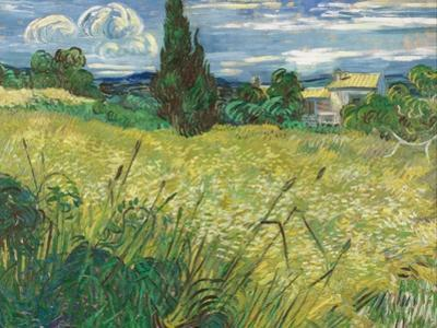 Green Wheat Field with Cypress
