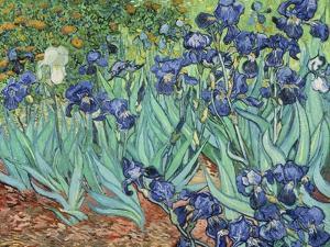 Irises, 1889 by Vincent van Gogh