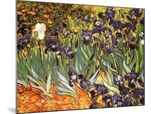 Irises, Saint-Remy, c.1889 by Vincent van Gogh